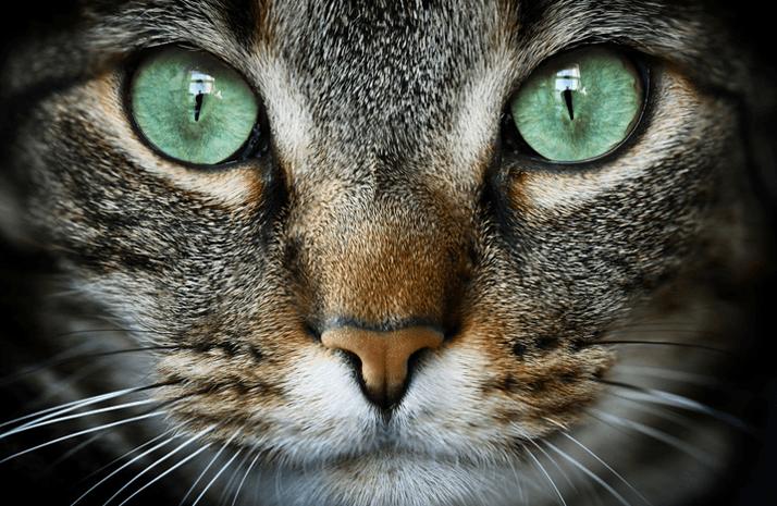 「何か来るにゃ…」 大阪地震の瞬間の猫動画に海外が注目 アメリカでは19世紀から軍で研究も