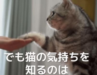 猫のこの仕草?、、、本当の意味を知ってますか?